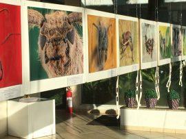 Exposição no Cit – Artes Plásticas e Fotografia